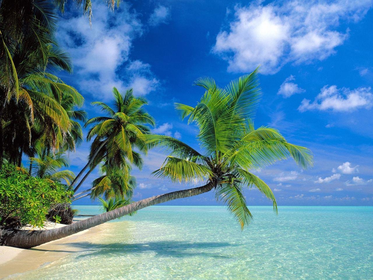 maldive paradiso tropicale