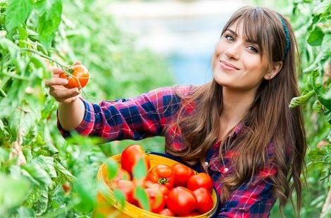 lavoro-raccolta-pomodori