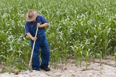 operaio agricolo cercasi provenza