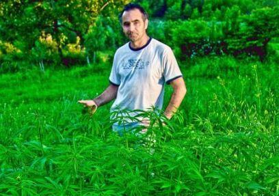 antonino chiaramonte cannabis