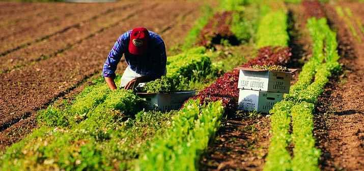 lavoro agricoltori
