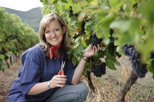 lavoro viticoltore