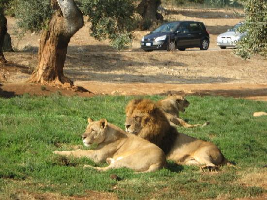 lavoro zoo safari