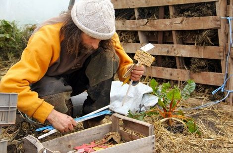 metodo pascal piante senza acqua e pesticidi