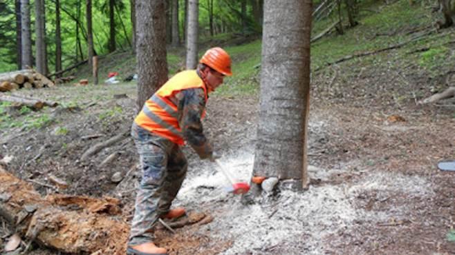 operai forestali lavoro
