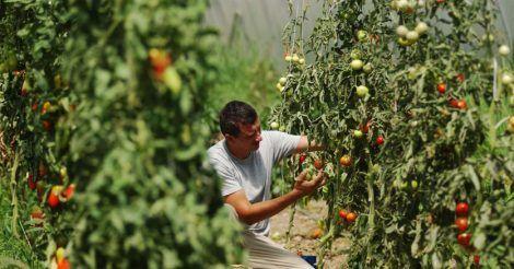 lavoro agricoltura