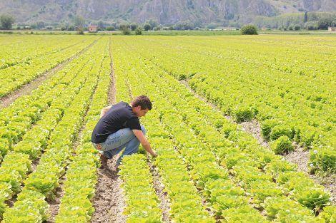 svizzera lavoro terra