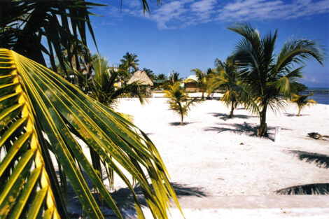 palm-trees-beach-1473796-638x425