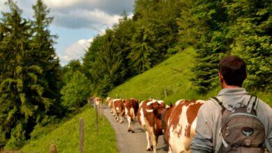 lavoro fattorie svizzera