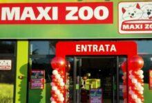 maxi zoo lavora con noi